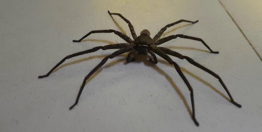 các loài nhện phổ biến