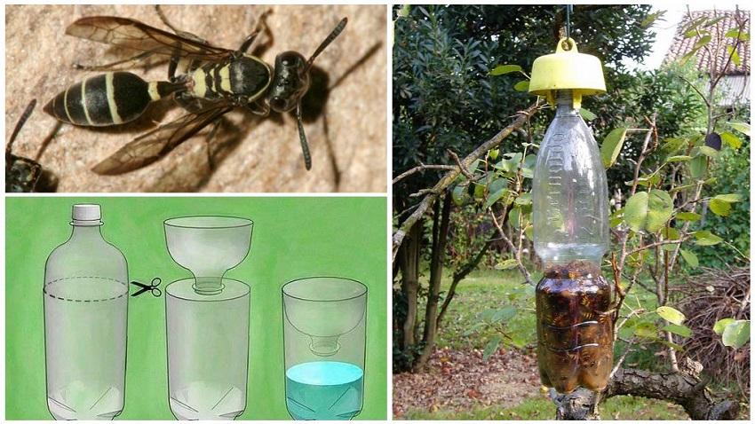 Cách bẫy ong bằng chai nhựa