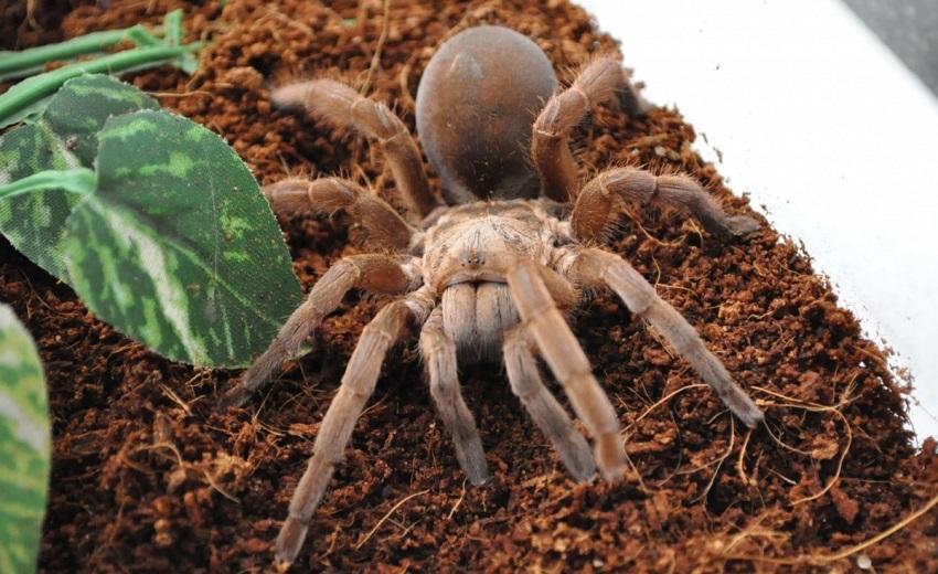 Cách nuôi nhện cảnh