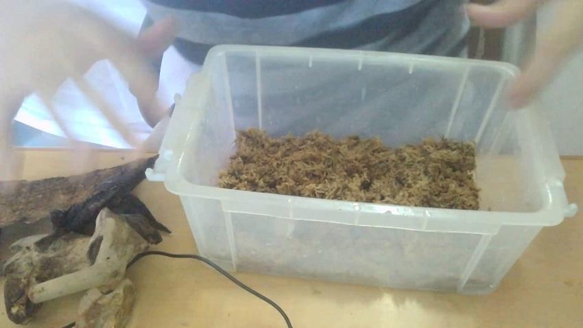 Chuồng nuôi bọ cánh cứng