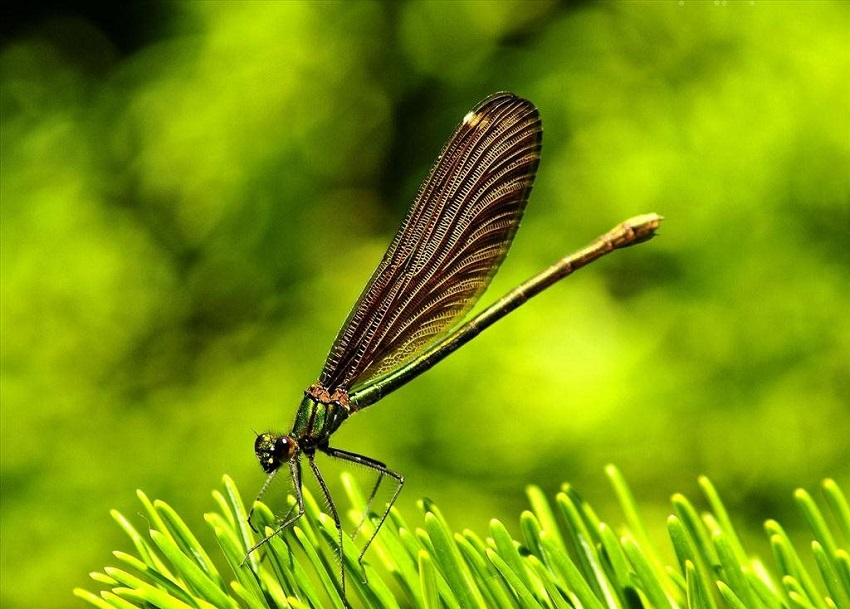 Hình ảnh con chuồn chuồn-47