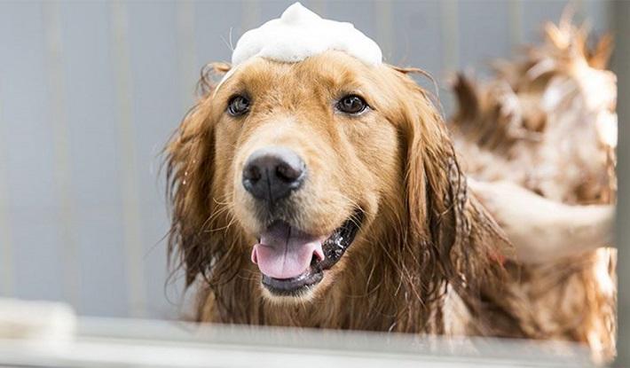 Vệ sinh cho chó thường xuyên